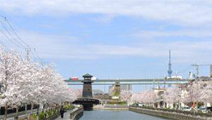 新川千本桜